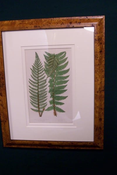 Antique fern chromolithograph framed 7