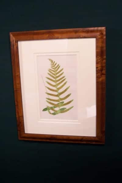 Antique fern chromolithograph framed 6