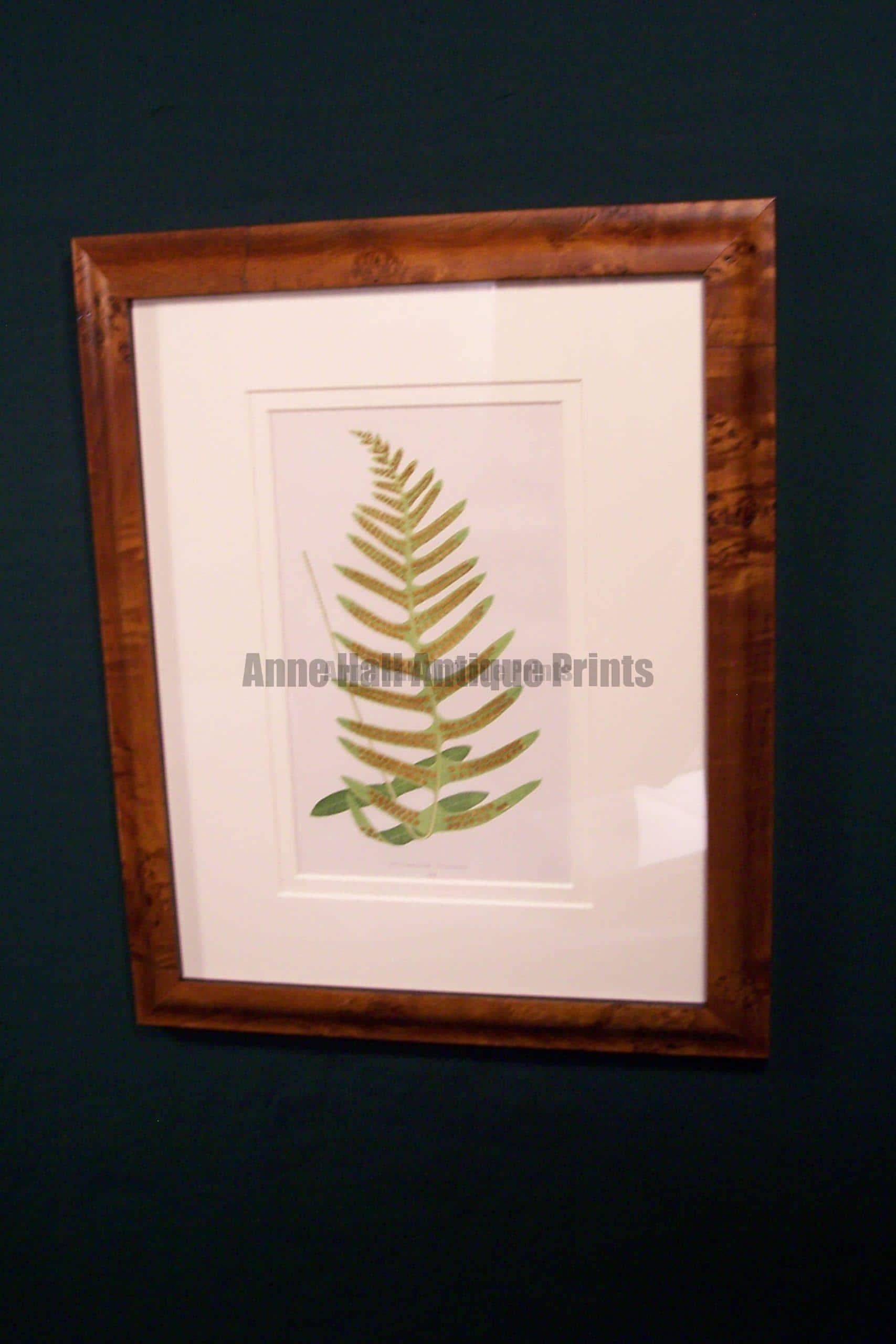 Antique fern chromolithograph framed 6