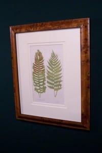 Antique fern chromolithograph framed 5