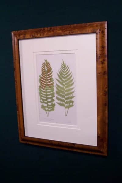Antique fern chromolithograph framed 5
