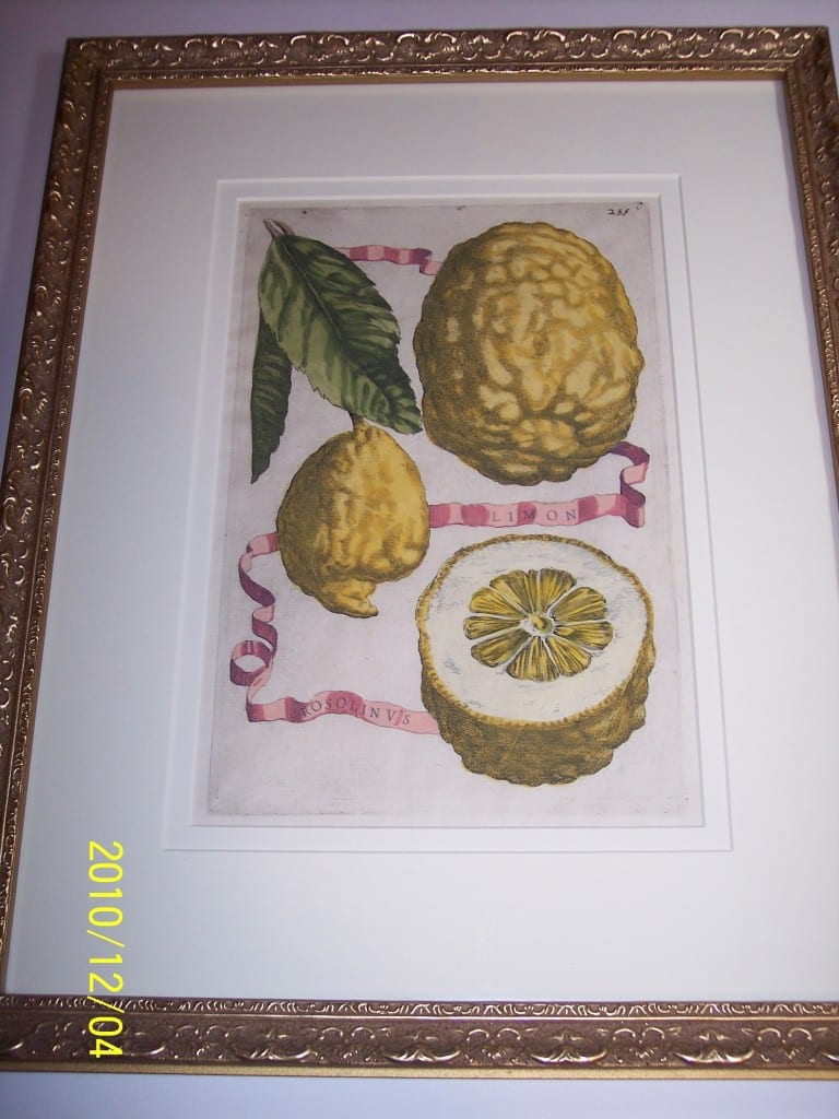 Lemons Hand Colored Ferrari. Limon Rosolinus.