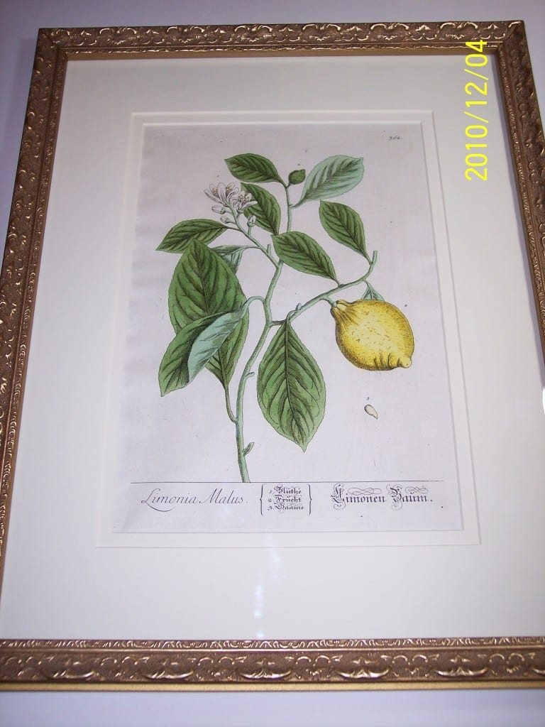 Lemons Hand Colored Blackwell. Physician's manual. Limonia Malus.