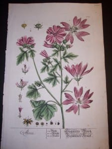 Elizabeth Blackwell Alcea Print PL 309 c.1750