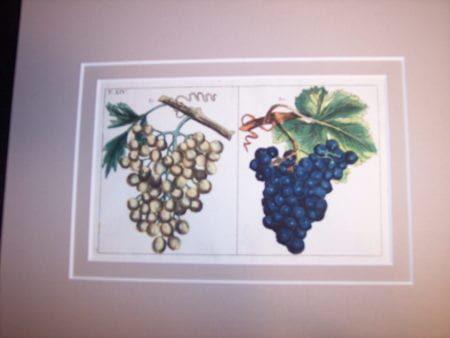 "Wilhelm 47 hand colored engraving Tab.XIV Double rag mat 8x10"" $85."