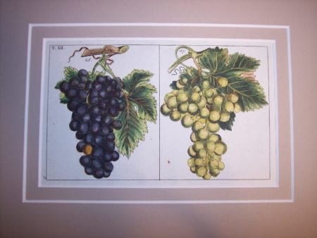 Wilhelm 49 hand colored engraving