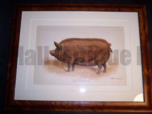 Antique Pig Print