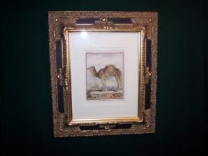 Framed Buffon Camel Engraving