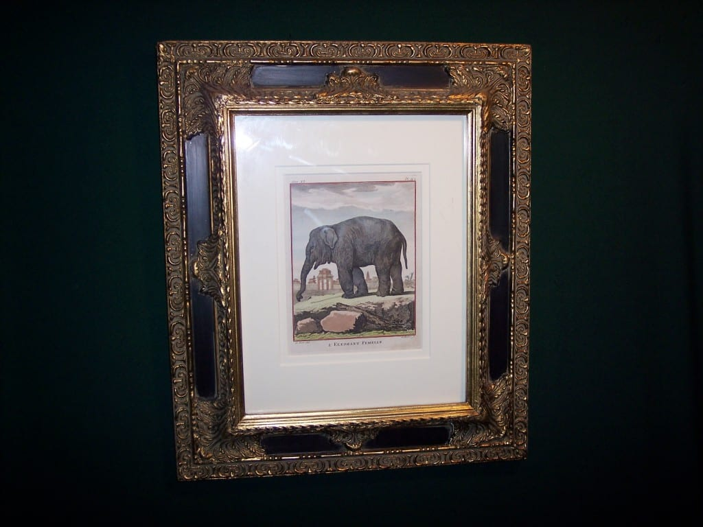 Framed Buffon Elephant Engraving