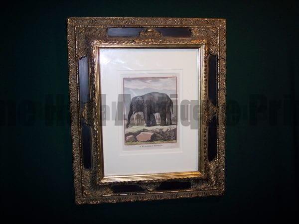 Framed Buffon Elephant Engraving
