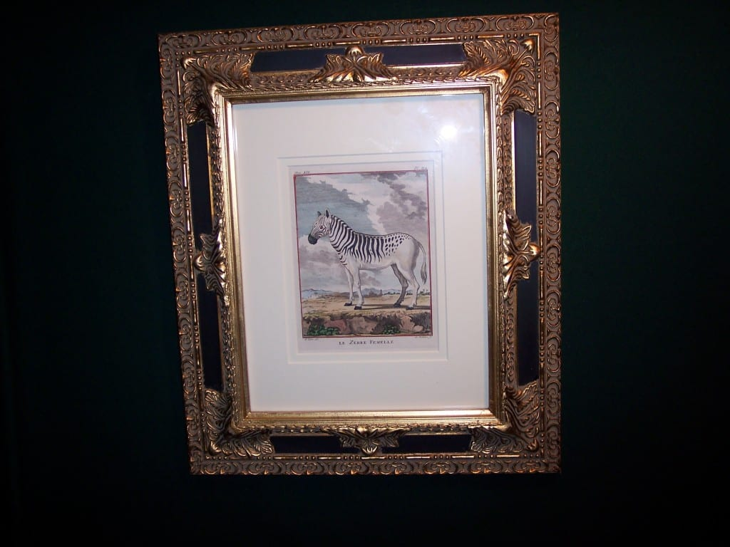 Framed Buffon Zebra Engraving