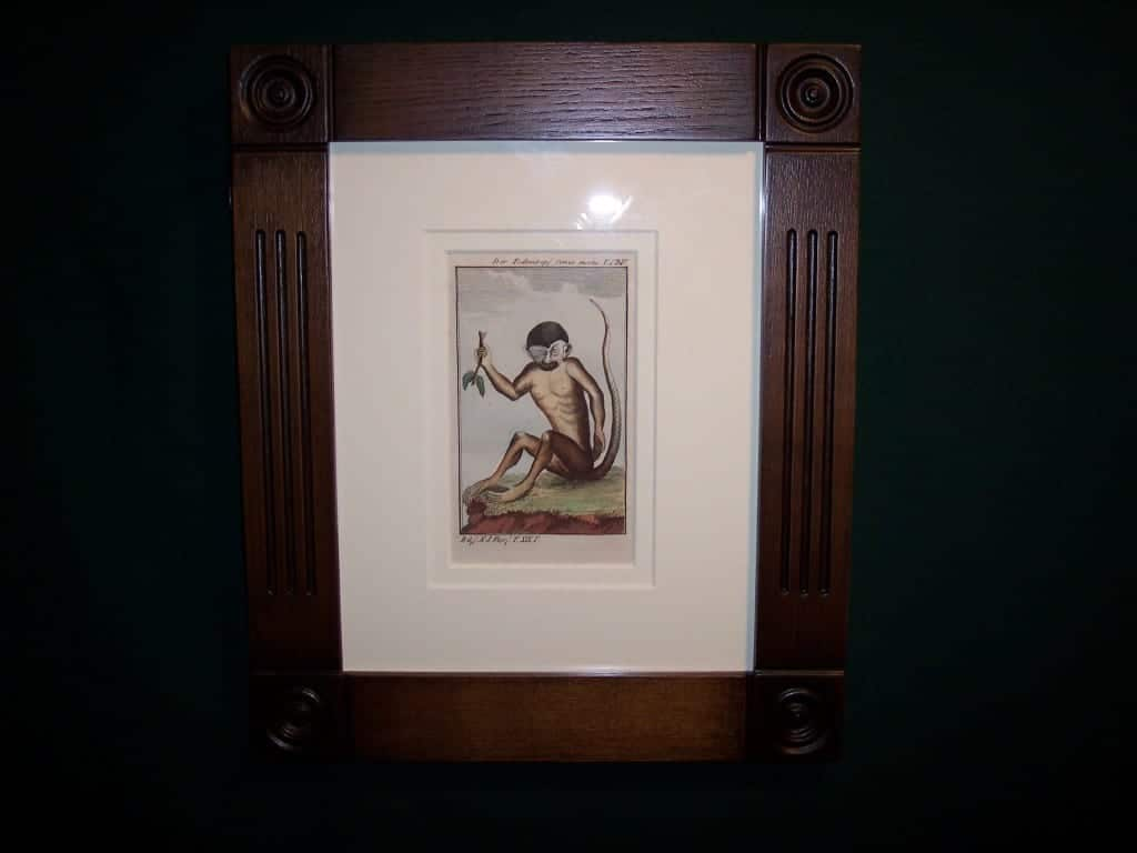 Buffon Monkey Hand colored engraving framed BFM2