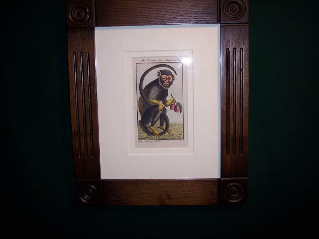 Buffon Monkey BFM6. Hand colored engraving framed.