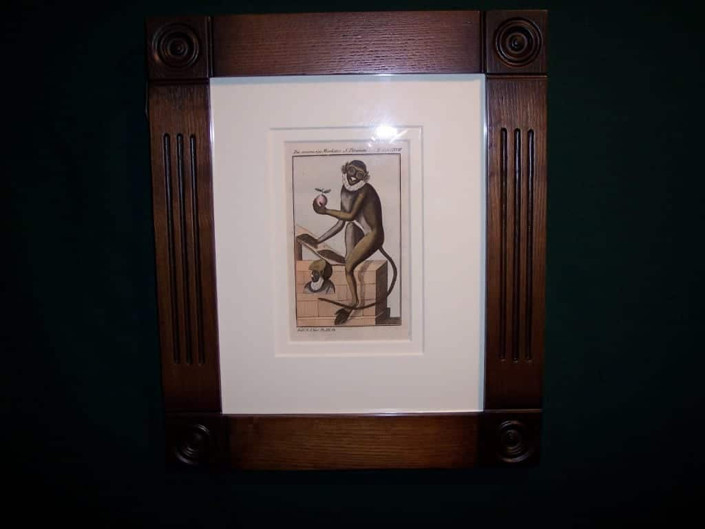 Buffon Monkey BFM5. Hand colored engraving framed. $175.