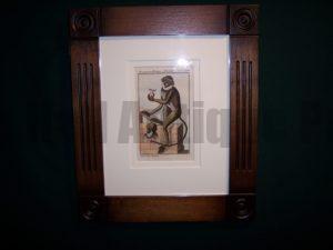 Buffon Monkey BFM5. Hand colored engraving framed. $175.
