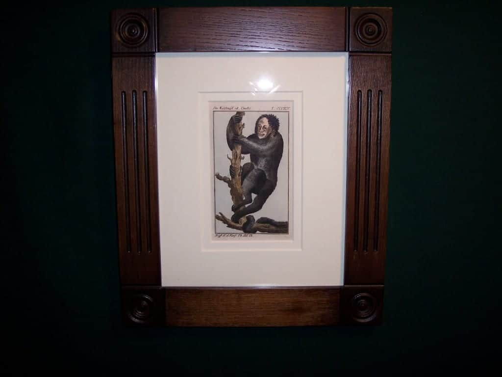 Buffon Monkey BFM3. Hand colored engraving framed.