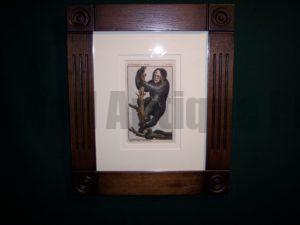 Buffon Monkey BFM3. Hand colored engraving framed.