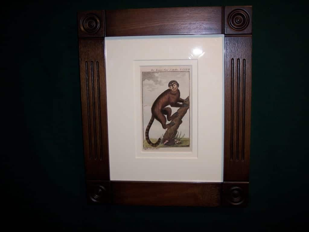 Buffon Monkey BFM4. Hand colored engraving framed.