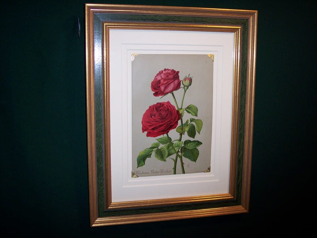old rose chromo lithograph