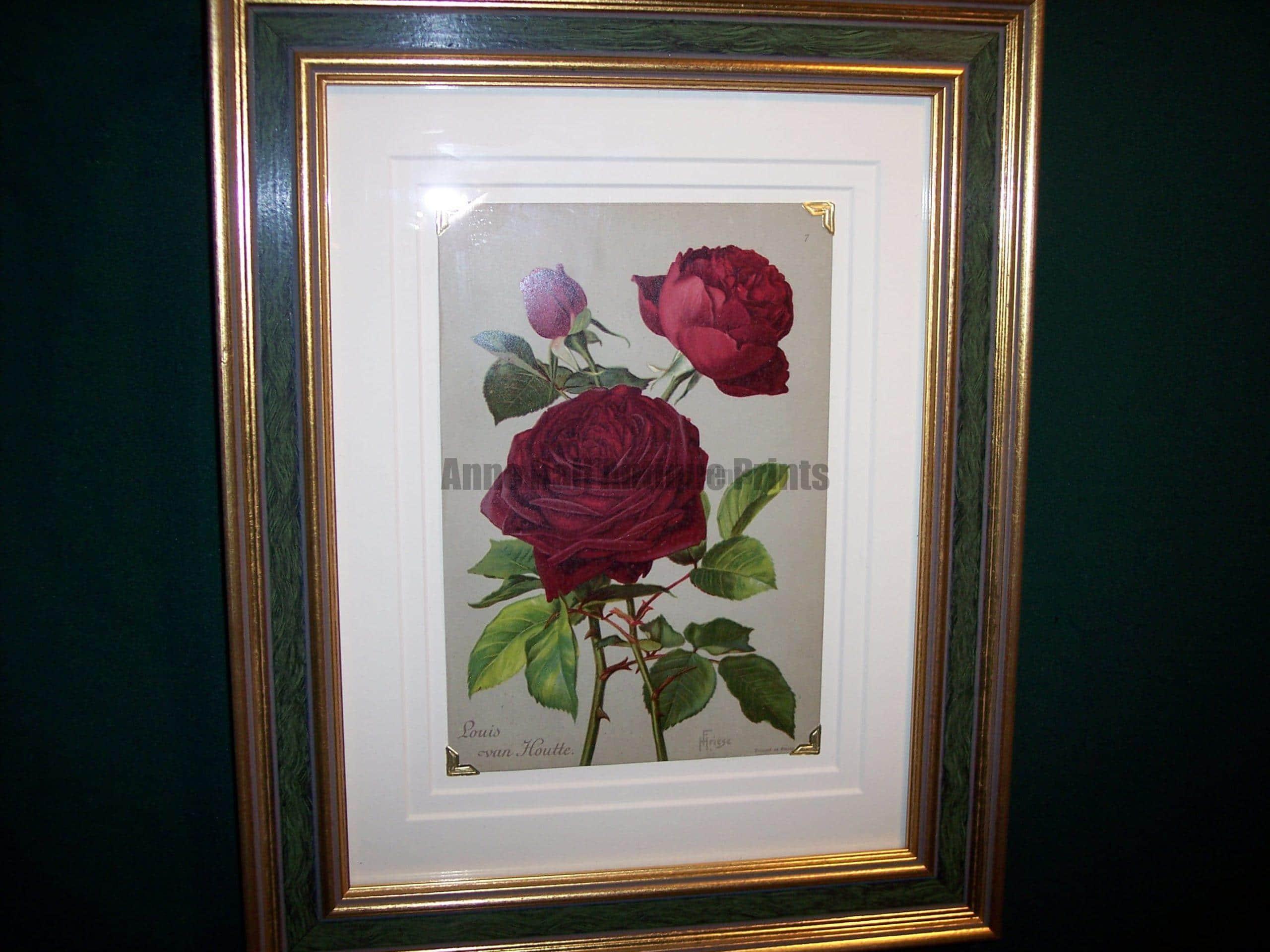 antique rose lithograph framed