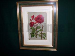 61571 Antique Rose Lithograph Framed