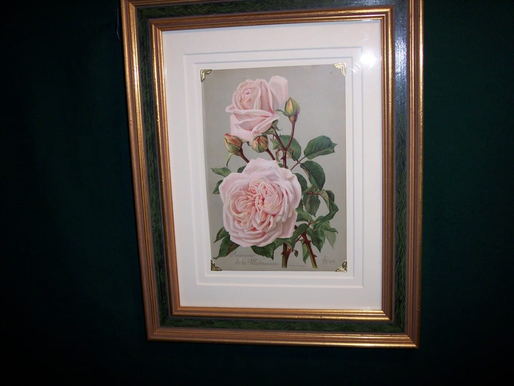 6159 Antique Rose Lithograph Framed