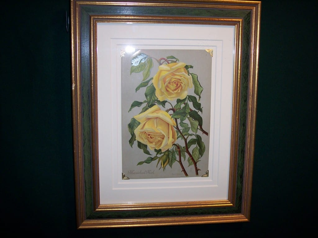 6162 Antique Rose Lithograph Framed