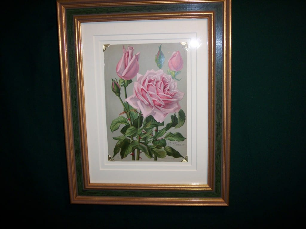 6158 Antique Rose Lithograph Framed