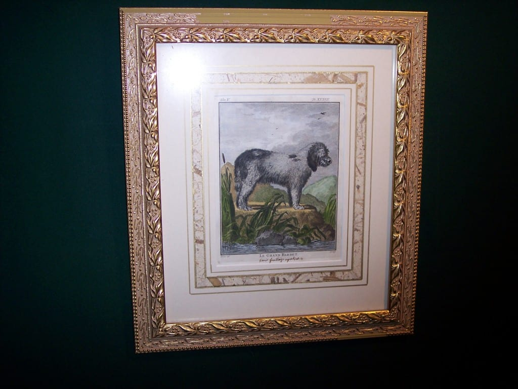 Buffon Dog Engraving Sheep Dog 6185