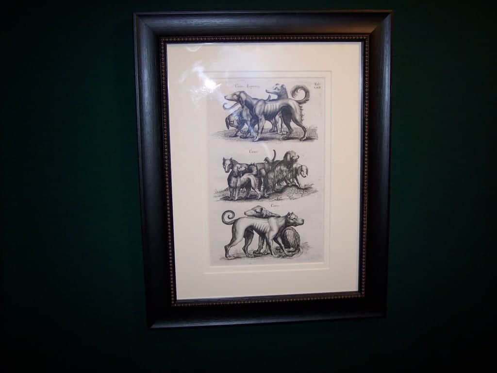 Mathias Merian Dog Print