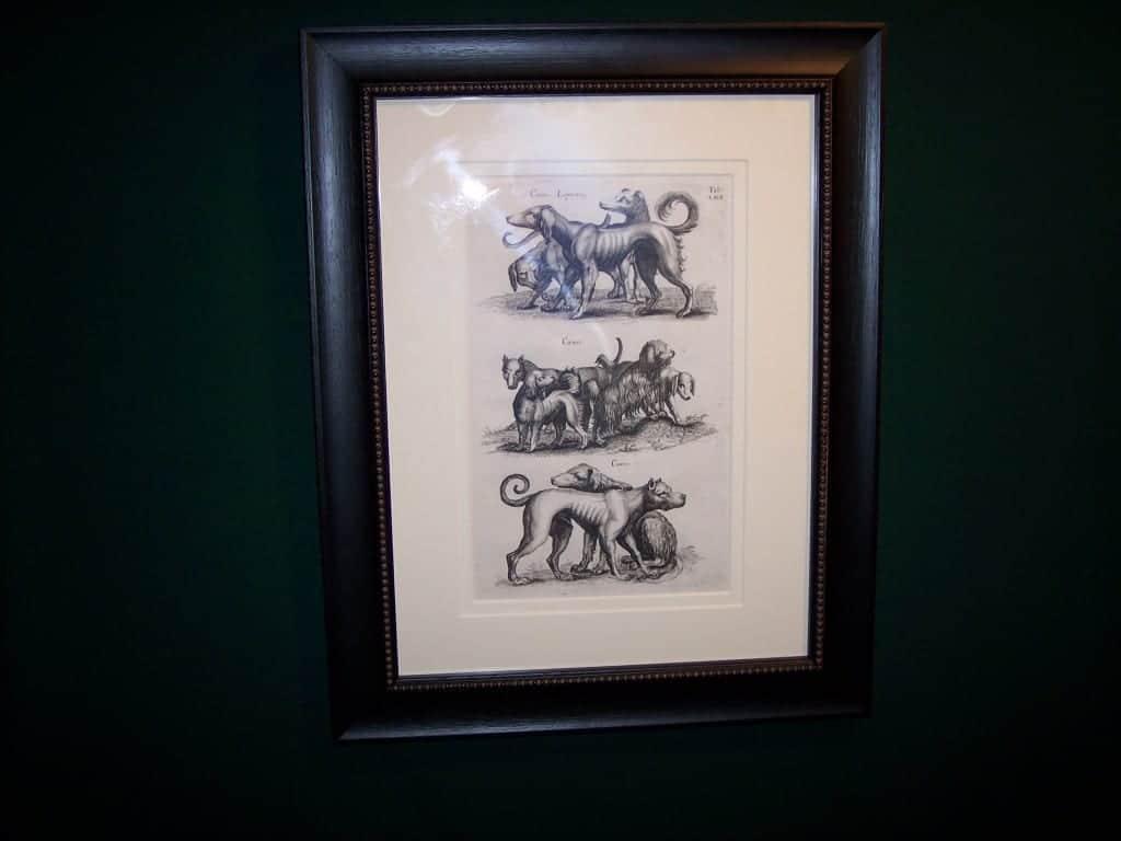 Mathias Merian Dog Print