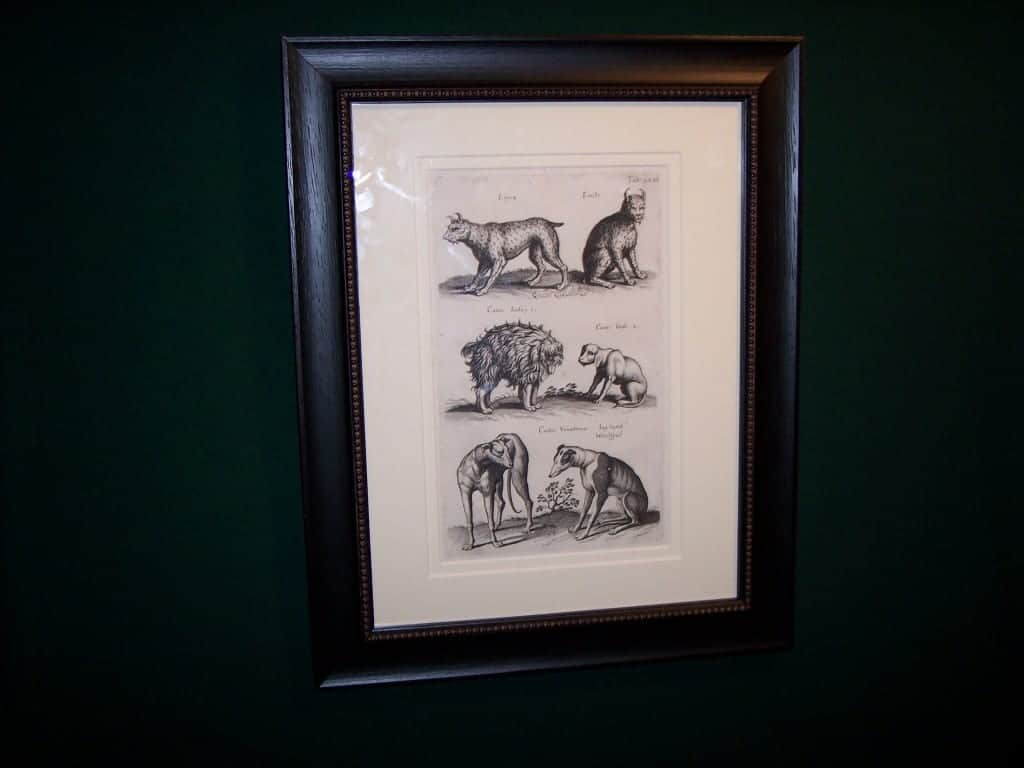 Mathias Merian Dog Print 6192