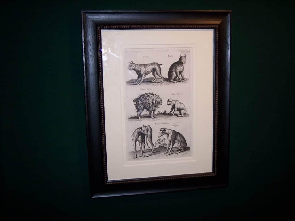 Mathias Merian Dog Print 6192