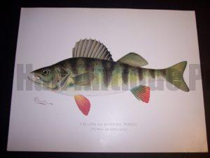 Denton Fish Print 7571 Perch 85.