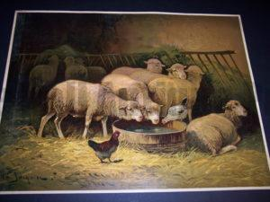Large sheep chromolithograph