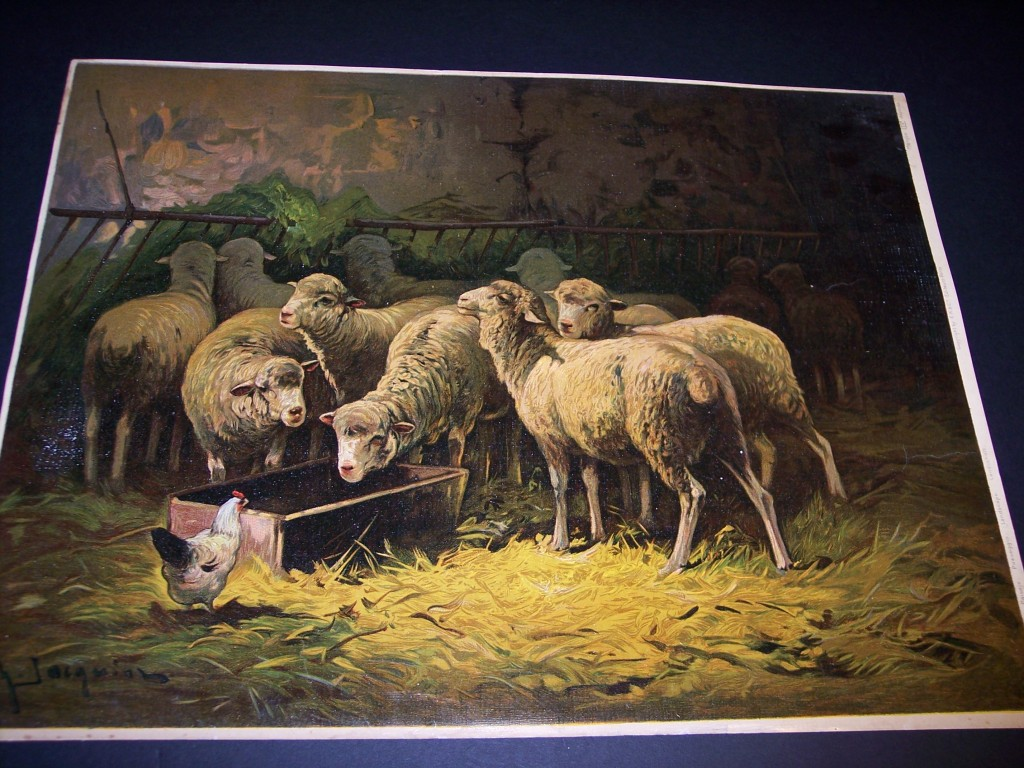 Large sheep chromolithograph c. 1900