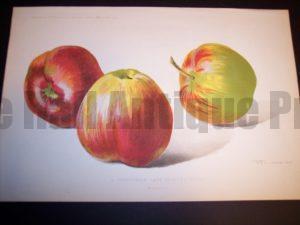 Profitable Apples to Grow