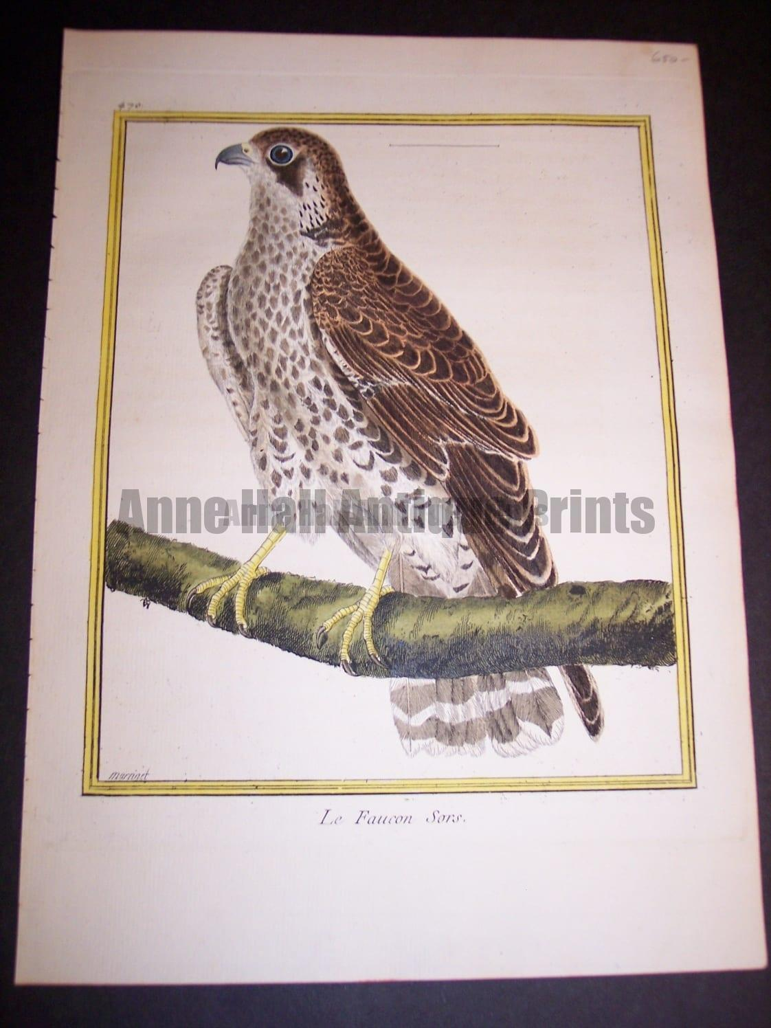 """Birds of Prey by Martinet. French hand colored copper plate engraving 1770-1783 @9x12"""""""