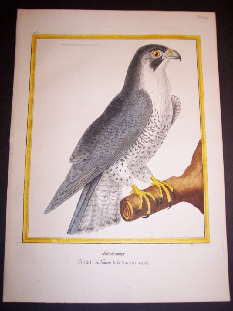 Birds of Prey by Martinet French hand colored copper plate engraving 1770-1783 9x12""