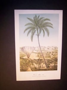 Oreca Alba antique palm print