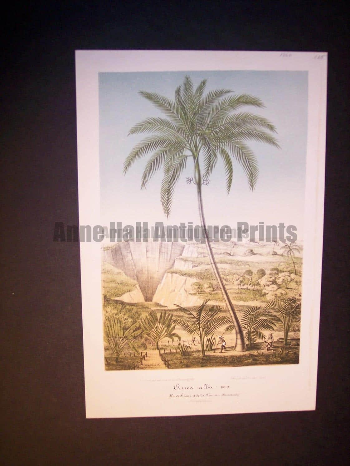 Oreca Alba antique palm print