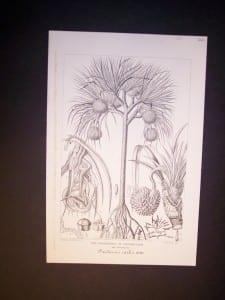 """Paudauus Utilis c.1870 7x10"""" 60."""