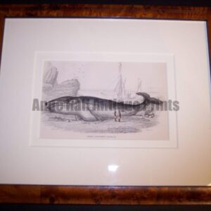 framed antique whale lithograph
