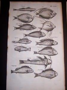 Merian Old Fish Print 1646