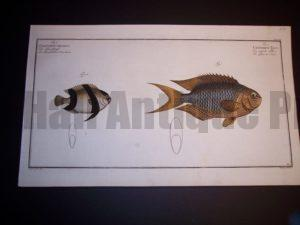 Eliser Bloch Fish Print