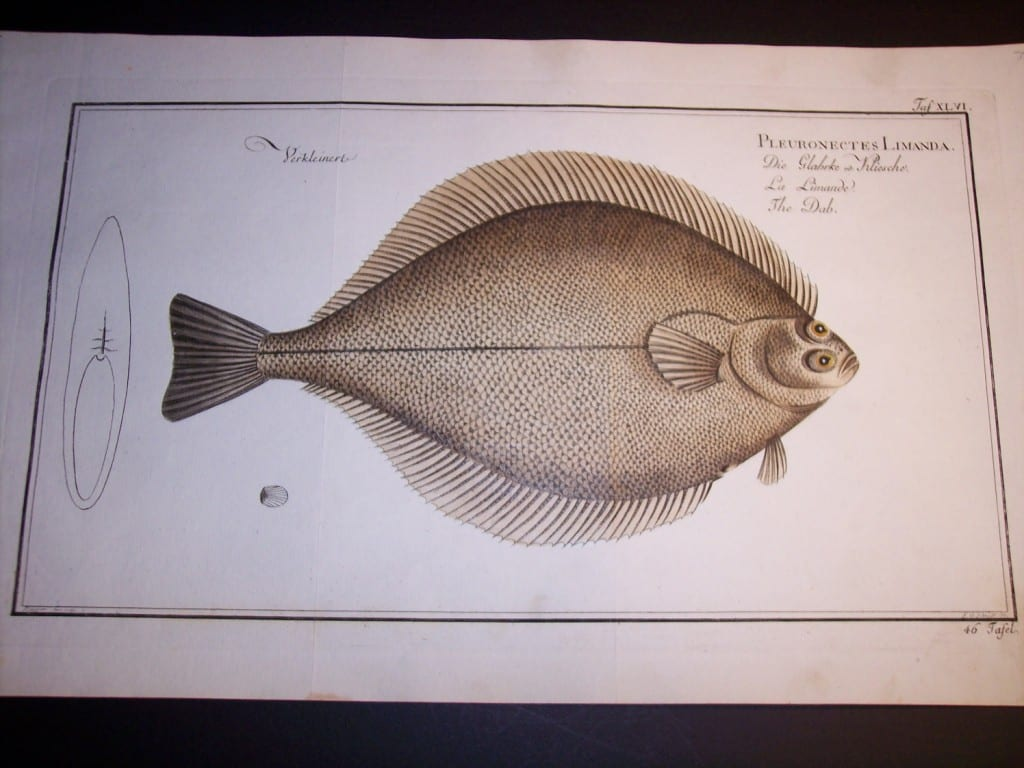 Elizer Bloch Fish Print c.1770