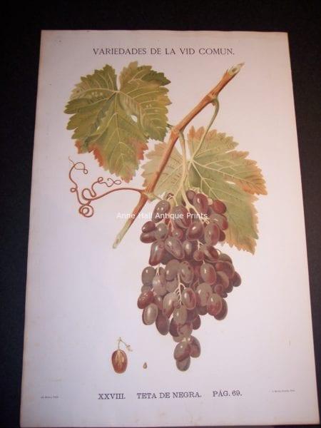 Rare Wine Chromolithograph p69 Teta de Negra. $450.