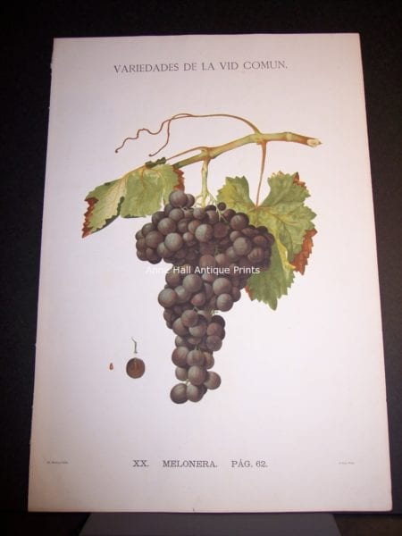 Rare Wine Chromolithograph p62 Melonera. $450.