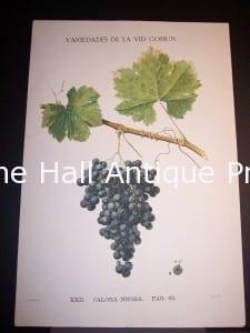 Rare Wine Chromolithograph p63 Calona Negra. $450.