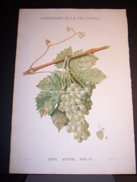 Rare Wine Chromolithograph p67 Ataubi. $450.